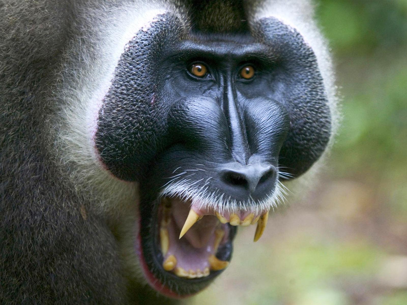 A Trifecta Of Horrifying Monkey