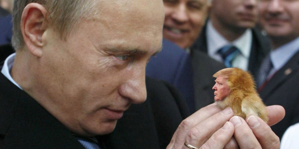putin's little birdy